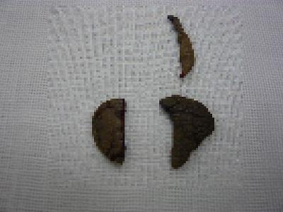 切除した小陰唇および副皮