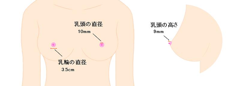 乳輪乳頭の平均サイズ